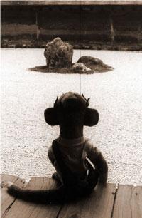 boba zen