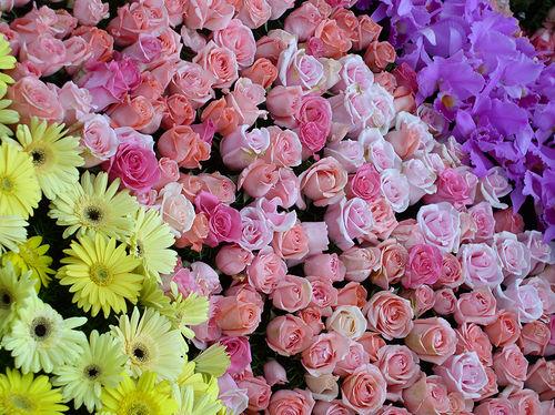 rose parade floats
